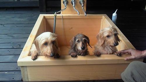 dog-hinoki-bath.jpg