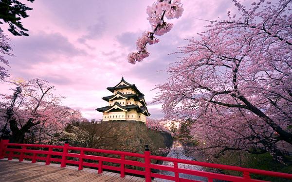 hirosaki-jo-sakura.jpg